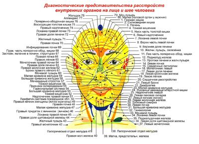 Зоны Захарьина-Геда. Диагностические представительства на лице и шее человека