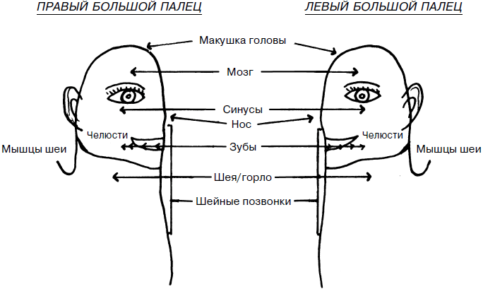 Проекции внутренних органов на стопе